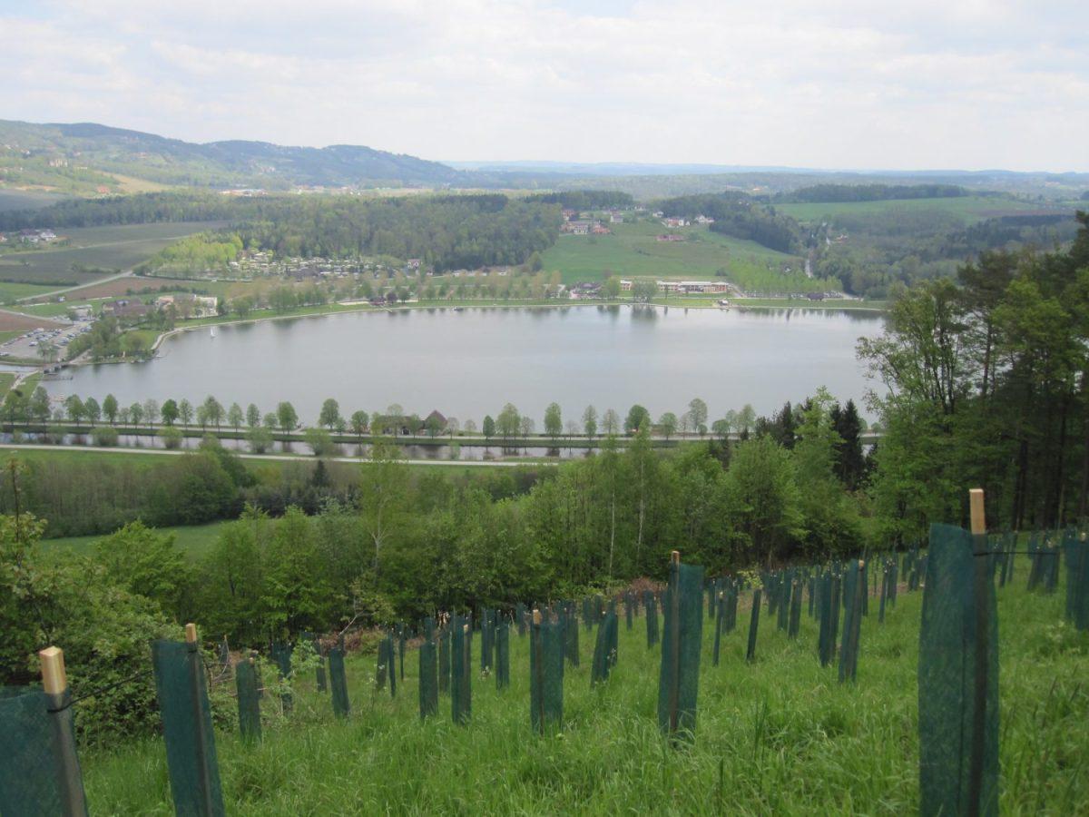 Blick auf den Stubenbergsee